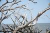 DSC_8652 (Tripping On Change) Tags: southcarolina harborisland island beaufort cemetery ocean beach shrimpshack alligator mussels nature