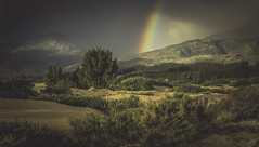Rainbow Nation (David Lea Kenney) Tags: rainbow landscape travel explore mountains trees tree southafrica africa franschhoek colors colorful colours epic beauty view mountain light