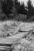 log paved path - Bohlenweg (meine.augenblicke) Tags: hohesvenn 2017 nordrheinwestfalen wallonie kameranikond750 wege logpavedpathes belgien urlaub ways bohlenweg moorlandschaft sw blackandwhite
