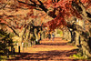 小石川植物園 (sunuq) Tags: tokyo japan 日本 東京 canon eos 5dsr ef70200mm llens 紅葉 小石川植物園