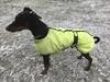 Saxon In The Snow (firehouse.ie) Tags: blackandtan male boy dog pinscher pinschers dobermans dobermanns doberman dobermann dobies dobie dobeys dobey dobes dobe snowing snow saxon