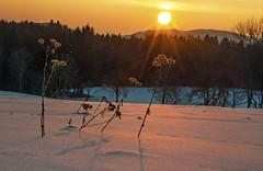 Bitterkalt - minus 18 Grad (Mariandl48) Tags: schnee bitterkalt sonnenaufgang blumen sommersgut wenigzell steiermark austria