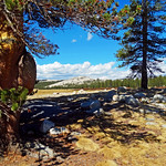 Made in the Shade, Tuolumne Meadows, Yosemite NP 10-17 thumbnail
