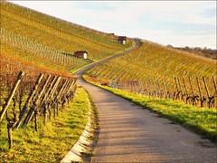 Weinbergstraße (almresi1) Tags: remshalden remstal vineyards street weg way nature landscape germany grunbach buoch