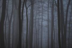 Nr.251 (Silvan Erne) Tags: fujifilm xt1 trees forrest deep dark bleak blue morning moody silouettes morningwalk simplicity minimalistic dust fog foggy landscape landscapephotography