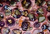 Purple Sea Urchins (Elizabeth Cash) Tags: urchin ocean tidalpool