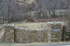 Stone entrance gate to Barlow (Beltway Photos) Tags: rappahannockcounty plantation antebellum stone woodville virginia unitedstates dilapidated abandoned