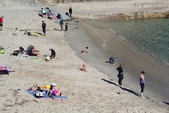 IMG_7570 (mudsharkalex) Tags: california pacificgrove pacificgroveca loverspointpark loverspointbeach beach