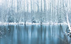 blueice (jussi.viljamaa) Tags: landscape winter bond forest ice maisemapofo trees water finland cold pond blue