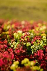 """""""En algún momento, alguien se revelará y se pondrá de pie..."""" (sbsrodman) Tags: cdmx green verde red rojo nikon50mm nikond5300 nikon ciudaddeméxico méxico flowers flores bokeh"""