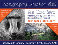 Exhibition at Zest Cafe Bistro