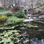 The Asian Pond thumbnail