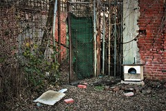 IMG_8946 (olivieri_paolo) Tags: supershots walls abandoned