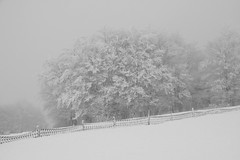 Ambiance brumeuse (Gisou68Fr) Tags: hiver winter neige snow clôture fence arbres trees canoneos650d fog foggy brume mist brouillard lemarkstein alsace france hautrhin upperrhine
