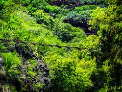 Hawaii-WaimeaCanyon-92.jpg (Chris Finch Photography) Tags: landcapes hawaiiphotography kauai waimeacanyon rainforest canyon river jungle falls chrisfinchphotography landscapephotographer hawaii waimea landscapephotographs grandcanyonofthepacific photographs landscapephotography canyons ocean waterfall waterfalls chrisfinch photography island landscape pacificocean islands wwwchrisfinchphotographycom valley