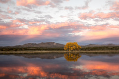 Sunrise at Bosque del Apache (Critter Seeker) Tags: bosquedelapache newmexico nature sunrise colorful nationalwildliferefuge fall fallcolors fallcolor autumn autumncolors morning reflection pond mountains mountain southwest