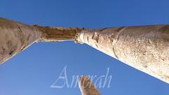 Roman Temple of Hercules (ameera_hasan1987) Tags: jabal amman jordan citadel
