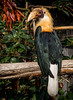 Si ton plumage se rapporte à ton ramage. (musette thierry) Tags: oiseau bird musette thierry nikon parc paîridaîza 28300 nikkor plume animalier animal animaux