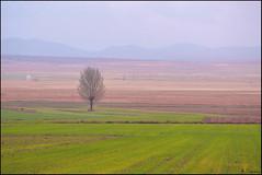 La soledad en el paisaje. (antoniocamero21) Tags: color foto sony lluvia soledad bello teruel aragón