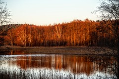 red wood (daimak) Tags: sunset lake red wood trees water lithuania sonyilce7