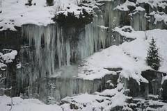 Icy Times (ivlys) Tags: norwegen norway winter eiszapfen icicles schnee snow baum tree landschaft landscape natur nature ivlys