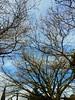 Oltre gli ostacoli, oltre tutto.. (Vicio 23) Tags: sun sub follow skyline sky nature natura foglie over pensieri sicily sicilia palermo