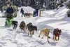 Away they go (begineerphotos) Tags: alaskanhusky dog husky sleddog dogsleigh snow dogsrunning