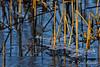 NoordHollands Duinreservaat (rob.bremer) Tags: duinen dunes duinlandschap castricum infiltratiegebied ice winter noordhollandsduinreservaat noordholland outdoor riet winterlandscape cane reflection reflectie