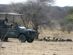 P1020782 (dieter.schultheiss) Tags: namibia naankuse lodge erindi game sossusvlei swakopmund safari cheetah lion gepard oryx dunes elephant elefant wild dog wildhund gnu zebra crocodile krokodil san bushmen buschmänner dead vlei solitaire