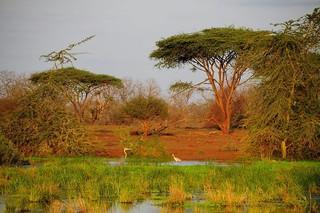 Zimbabwe Cape Buffalo Hunt 85