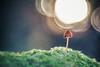 Resplandeciente (www.studio360fotografia.es) Tags: pentacon80mm setas valdeinfierno olympus omd em10 mushroom fungi pentacon bokeh desenfoque proyector projector nature naturaleza fantasia fantasy resplandeciente