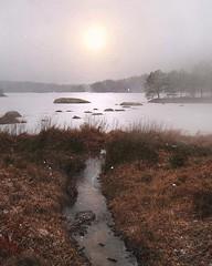 ~ frozen lake ~ Karlskoga, Sweden (Tankartartid) Tags: winter vinter bleksol blek palesun pale sol sun skog forest dimma fog foggy snow trees snö träd frusen frusensjö sjö frozenlake lake norden nordic värmland karlskoga europe sverige sweden instagram ifttt
