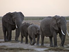 meet the family (lesleydugmore) Tags: safari kenya africa africaelephant browngreen outside outdoor nature wild