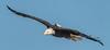 SEA--2 (shane422) Tags: eagles ld14 leclaire nature