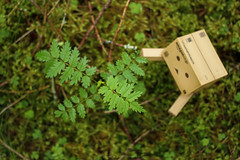 Danbo (Never A Dull Moment.) Tags: yotsuba danbo danboard cardbo amazoncojp amazon boxman nature life growth plant
