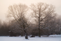Winter Foggy Morning (GnondPomme) Tags: ifttt 500px landscape sunrise fog morning winter tree snow fuji france helios fujifilm xe1 lens turbo 44m4