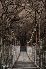 Spooky bridge (Glen Orchy, Scotland) (Renate van den Boom) Tags: 02febuari 2018 architectuur boom brug europa glencoe grootbrittannië jaar landschap maand monotoon natuur renatevandenboom schotland seizoenen stijltechniek winter