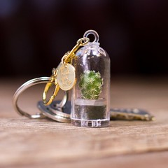 Keyring with pet cactus inside (mywowstuff) Tags: gifts gadgets cool family friends funny shopping men women kids home