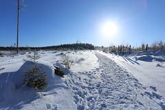 IMG_0236 (rudolf.brinkmoeller) Tags: eifel wandern natur eifelsteig hohesvenn