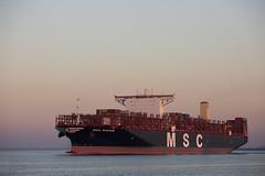 MSC MIRJAM (angelo vlassenrood) Tags: ship vessel nederland netherlands photo shoot shot photoshot picture westerschelde boot schip canon angelo walsoorden cargo container mscmirjam