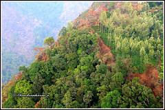 7607 - shola forest, Coonoor (chandrasekaran a 49 lakhs views Thanks to all.) Tags: sholaforest coonoor nilgiris tamilnadu india canon eos400d