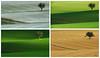 watching the time goes by (Lutz Koch) Tags: taunus idstein idsteinerland landscape landschaft elkaypics lutzkoch lonetree tree baum einsam minimalism minimalismus acker field feld sommer winter frühling summer spring collage quadtych