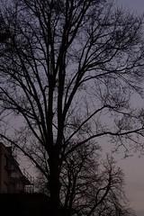 up right tree house (fdfotografie) Tags: up right winter tree house baum bäume haus äste zweige kahl ausschnitt flora pflanze silhouette himmel schwarz dunkel hell violett architektur gerüst muster struktur outdoor tageslicht dslr farbfoto d7100 köln garten expressiv serie dämmerung hochformat