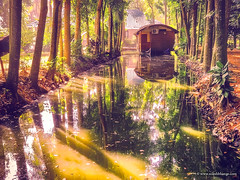 Beautiful Houseboat (bnilesh) Tags: alleppey kerala outdoor click green houseboat india landscape mist mobile mobilephotography nature oneplus sunbeam sunlight tourism travel trees water