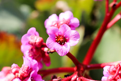 Berlín_0277 (Joanbrebo) Tags: berlin alemania de flors flores flowers fleur fiori blumen blossom nature naturaleza natura hausderkulturenderwelt tiergarten canoneos80d eosd efs1855mmf3556isstm autofocus magicmomentsinyourlifelevel3 magicmomentsinyourlifelevel4