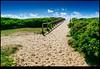 171209-4975-XM1.jpg (hopeless128) Tags: australia path sky 2017 sydney sand curlcurl newsouthwales au