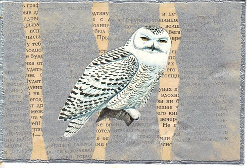 Foreign Owl pc