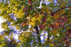 Autumn memories (Matjaž Skrinar) Tags: 1025fav 500v20f