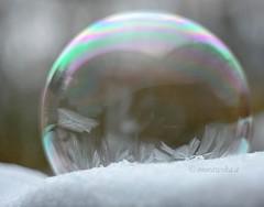Frost (agnieszka.a.morawska) Tags: lublin mróz zima helios44m helios winter bubble bańka frost
