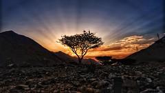 Tree of Life (Sanjiban2011) Tags: uae khorfakkan nature outdoor landscape sunrise sunrays dawn earlymorning tree singletree mountains valley wadi nikon d750 fullframe tamron tamron1530